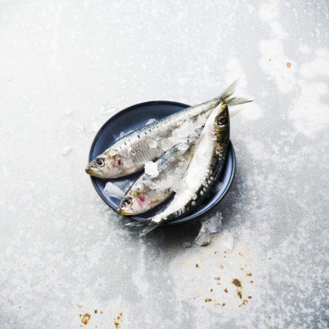 Petits poissons Photo Laurent Grivet
